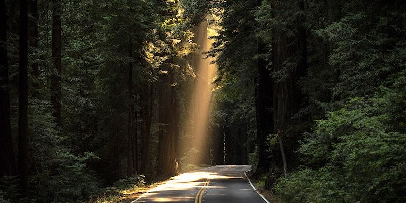 A sunbeam shining a blacktop highway leading through a forest